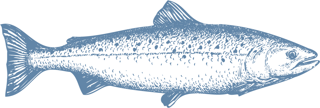 The fresh cool waters of southern Chile are ideal for farming Atlantic salmon, a large fish with a long body and a characteristically silver color with black spots on its body. Its meat is very versatile for all types of cuts, as well as being very healthy due to its high protein and Omega-3 content. - Producto de Aqua Chile