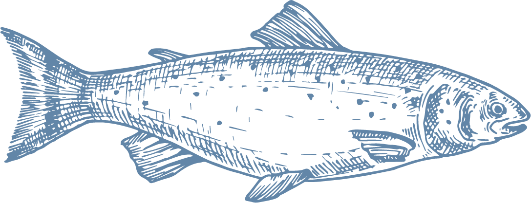 """In Japan, Coho salmon has become a much sought-after food product that has gained great recognition, and is consumed in different ways, especially salted and cooked in a way that is known as """"kirimi"""". Just like other salmonids, it has a high percentage of DHA that makes it greatly appreciated for its good levels of Omega-3. - Producto de Aqua Chile"""