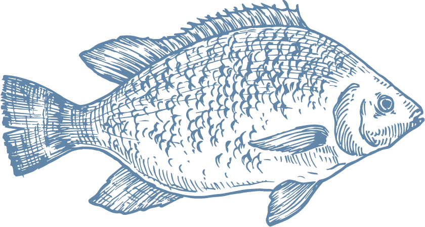 Tilapia is a low-calorie food that is rich in essential proteins, minerals and vitamins. AquaChile Tilapia is grown in freshwater in Costa Rica, with great care for its welfare, the environment and the health of those who will consume it. - Producto de Aqua Chile